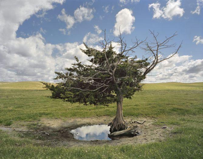 AndrewMoore_Homesteaders_Tree.jpg